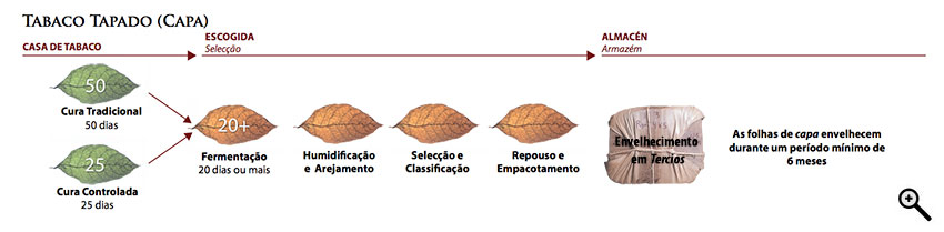 grafico-procesoscapa-pt